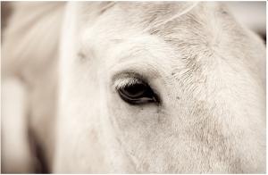 FI horse eye