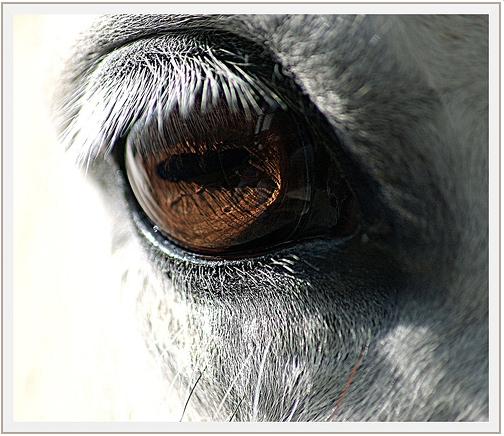 Если бы глаза у животных были спереди, а не по бокам